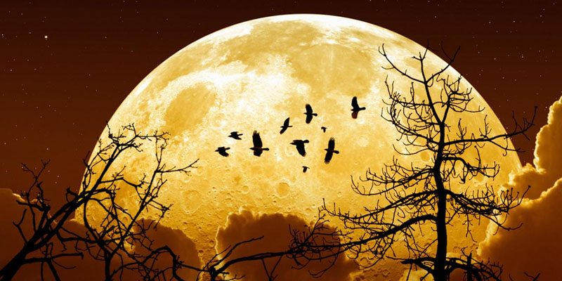 november supermoon | revelationrevealed.online